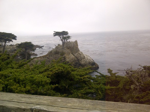 Lone Cypress- Americas most photographed Tree